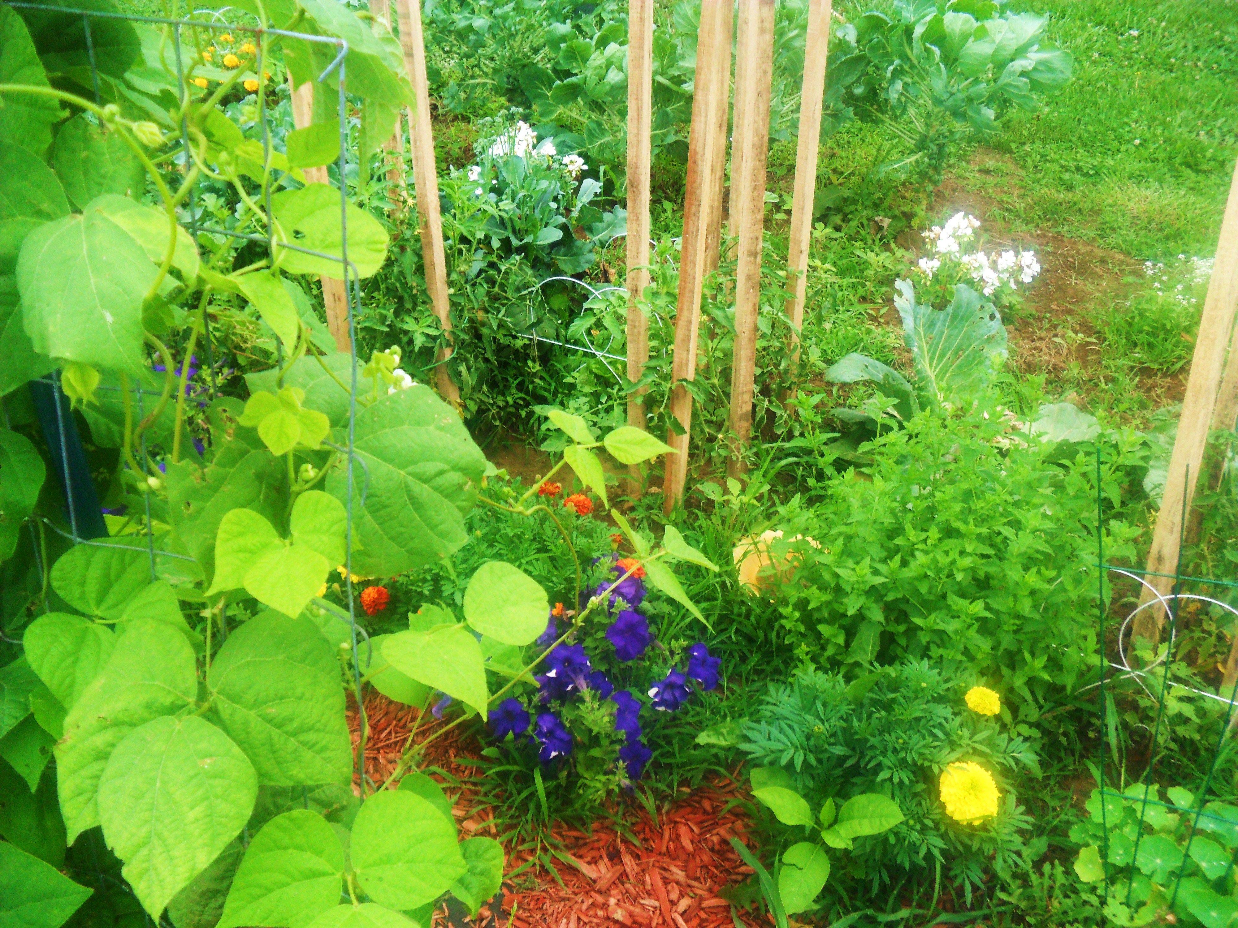 Companion planting outdoor garden space pinterest for Planting a garden