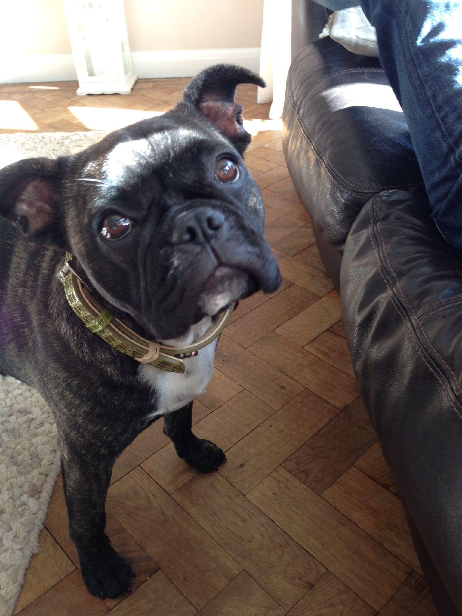 French Bull dog. Frenchie | Dogs | Pinterest