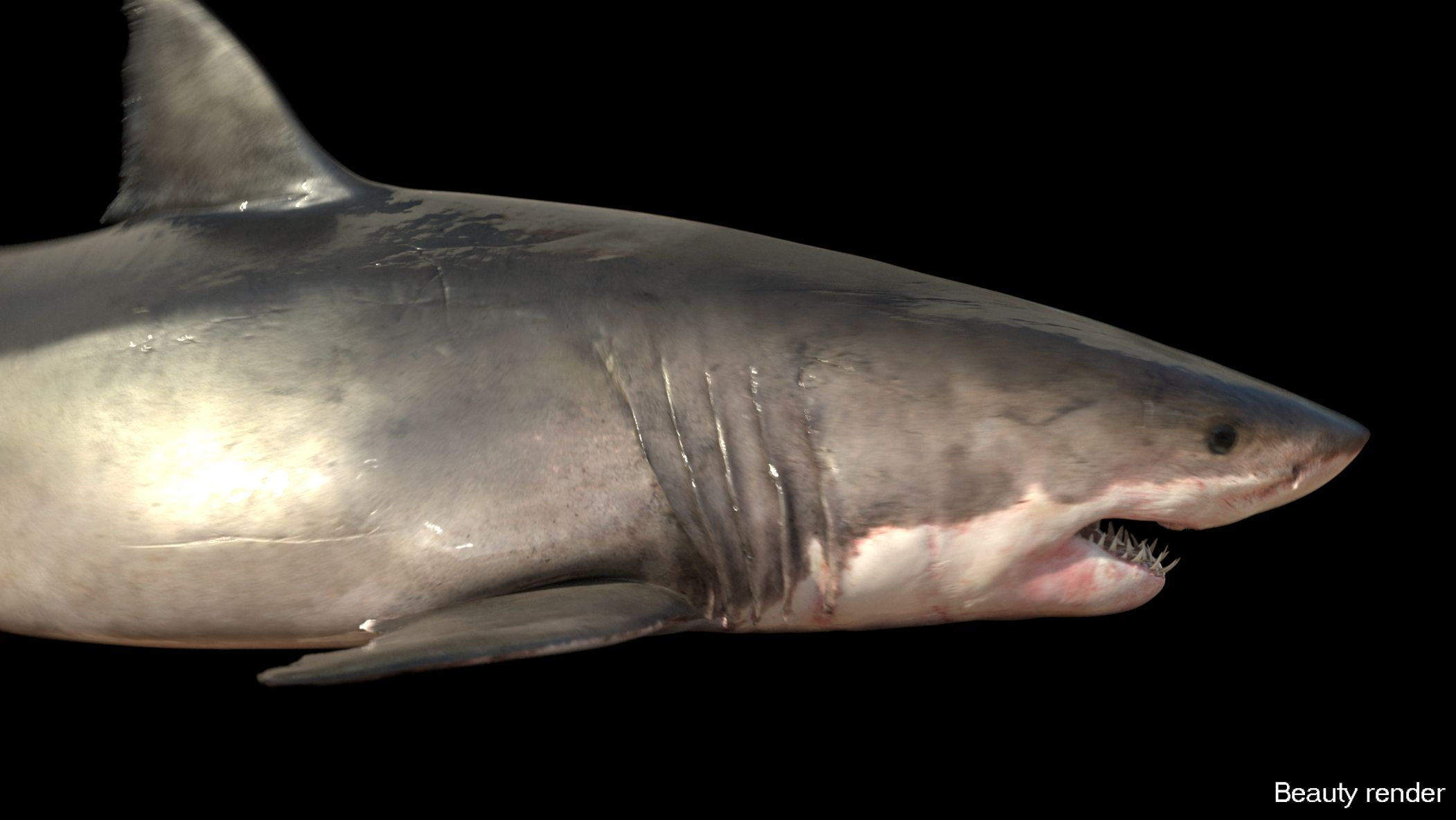 Great white shark texture
