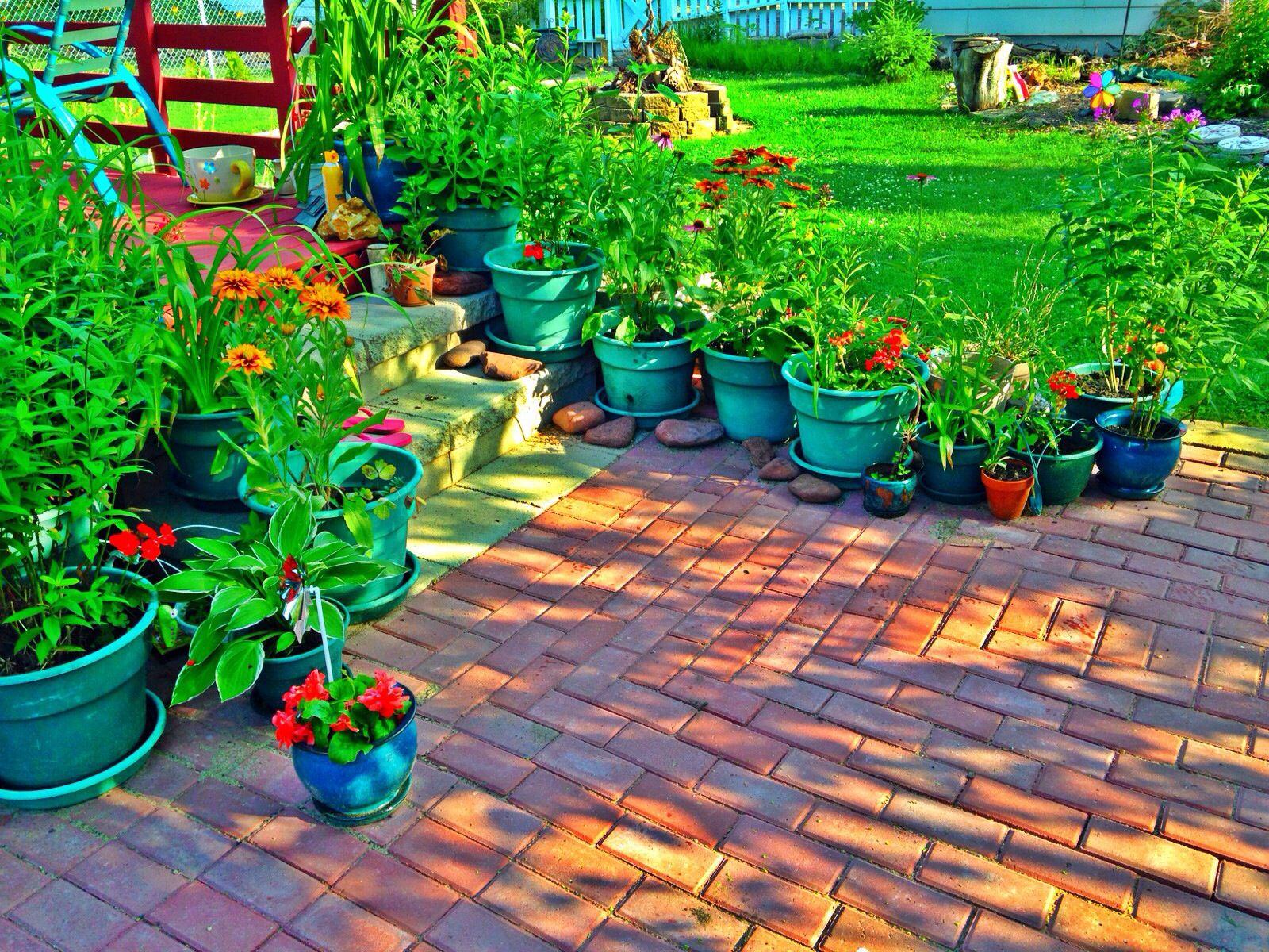 My Mexican Garden 2014 Marina 39 S Garden Pinterest