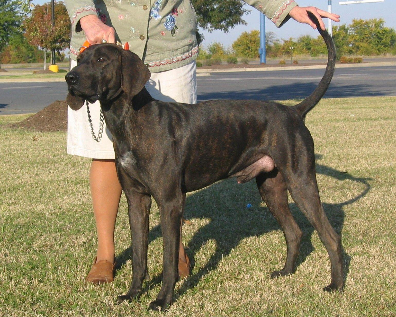 cute plott hound dog - photo #30