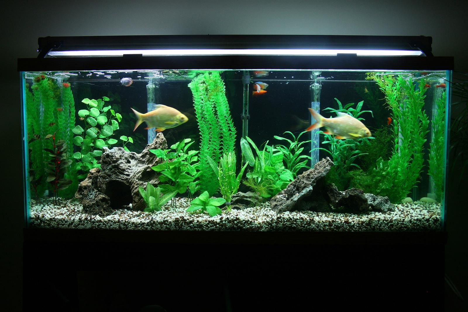 20 gallon fish tank 88 aquarium internal filter 3 in 1 for How many fish in a 20 gallon tank