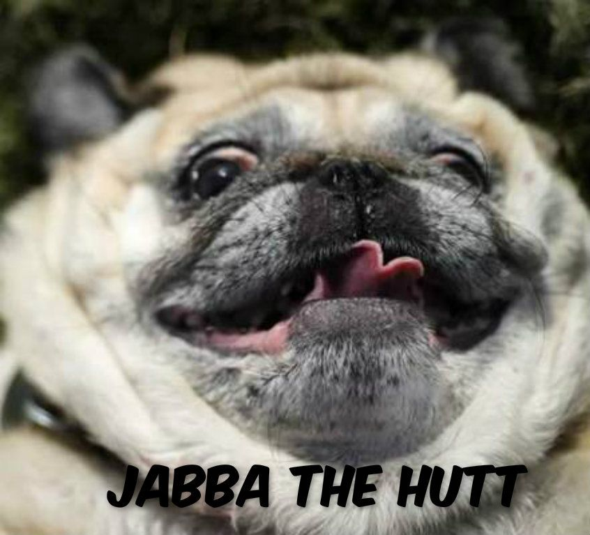 Funny Dog Picture Pug With Captions Images