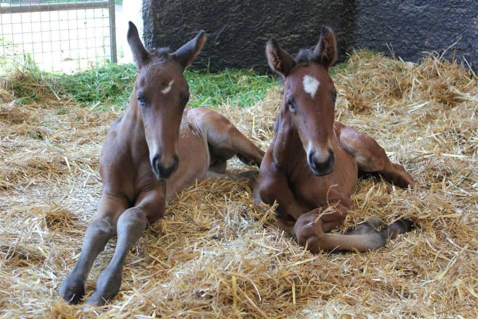 twin foals | Twins | Pinterest