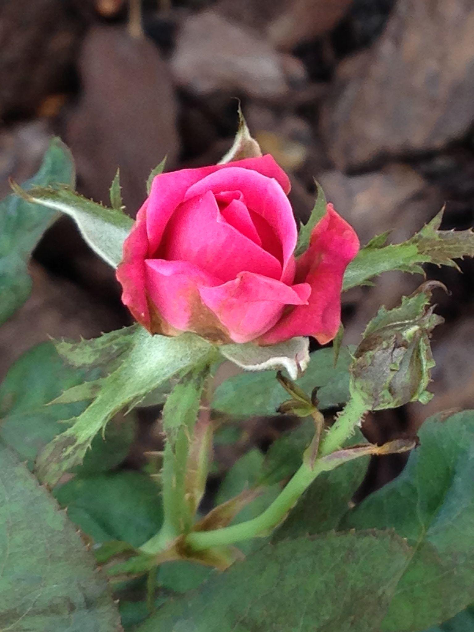 blooming flowers reviews