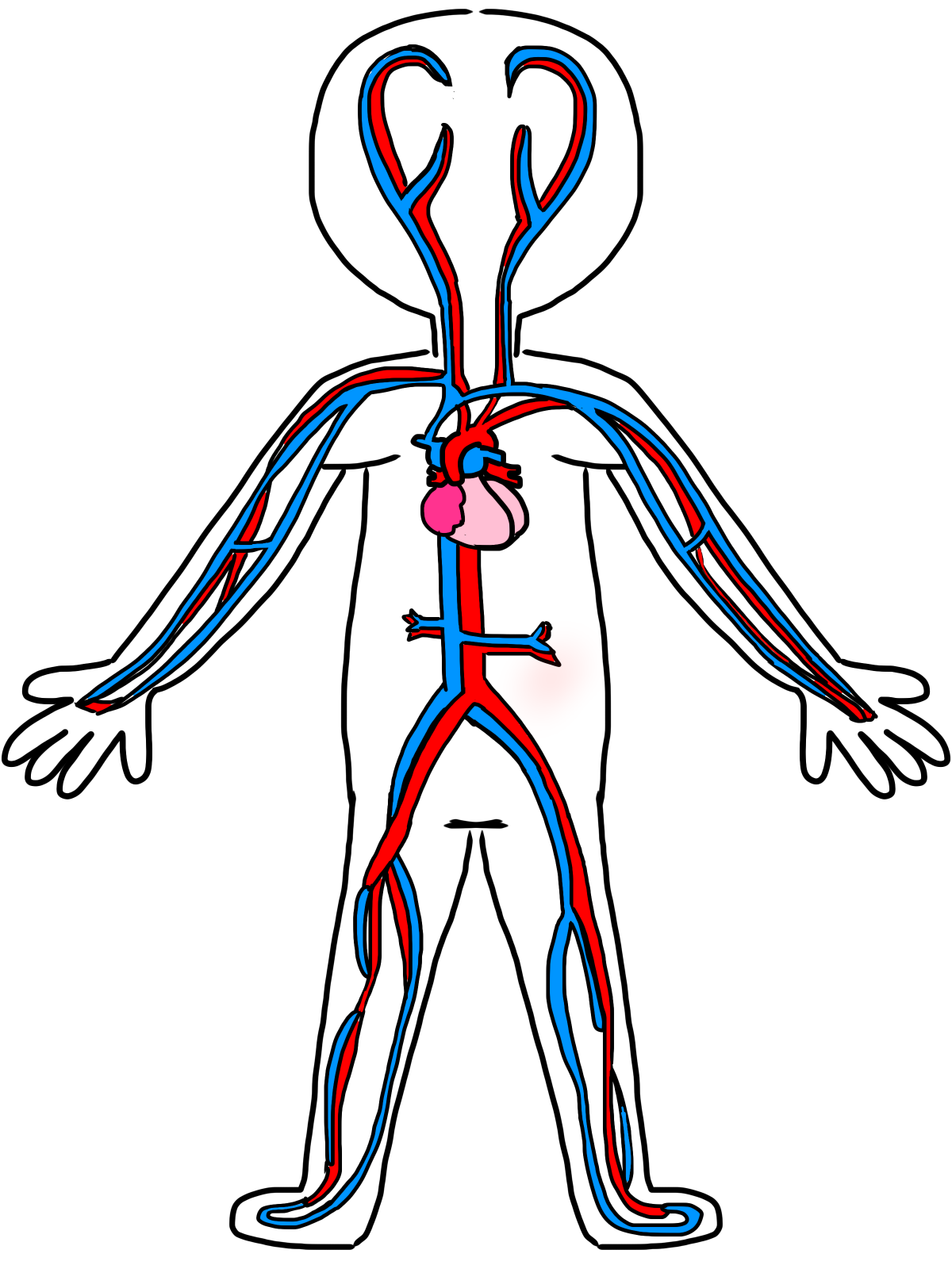 Human organ system drawing