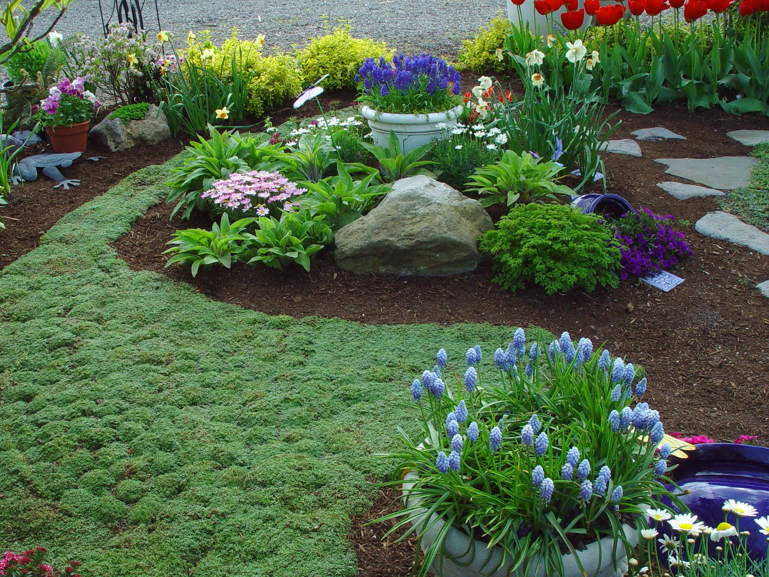 Ground cover gardening ideas pinterest for Landscaping ground cover plants
