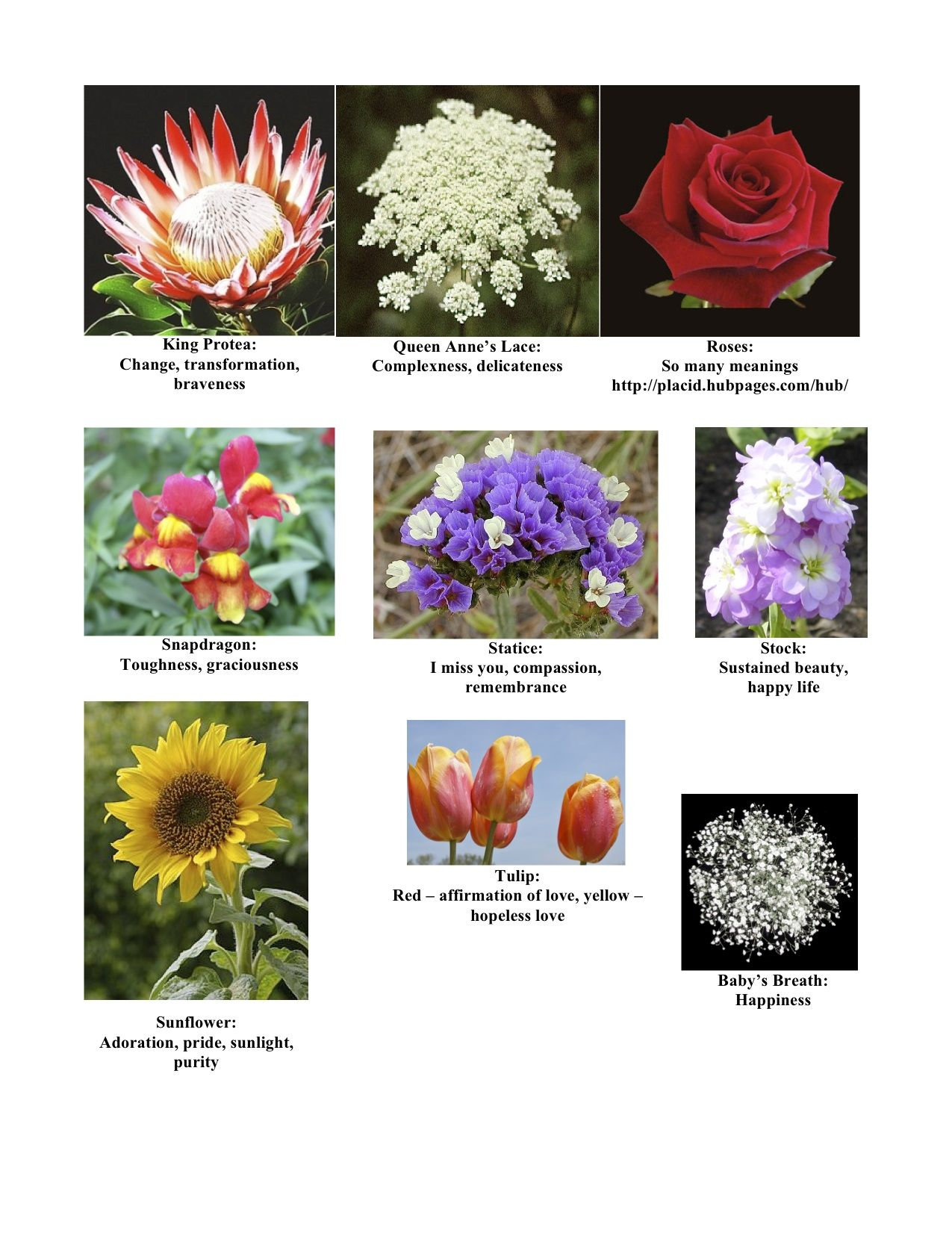 Flowers and their meanings page 3 of 3 Resources