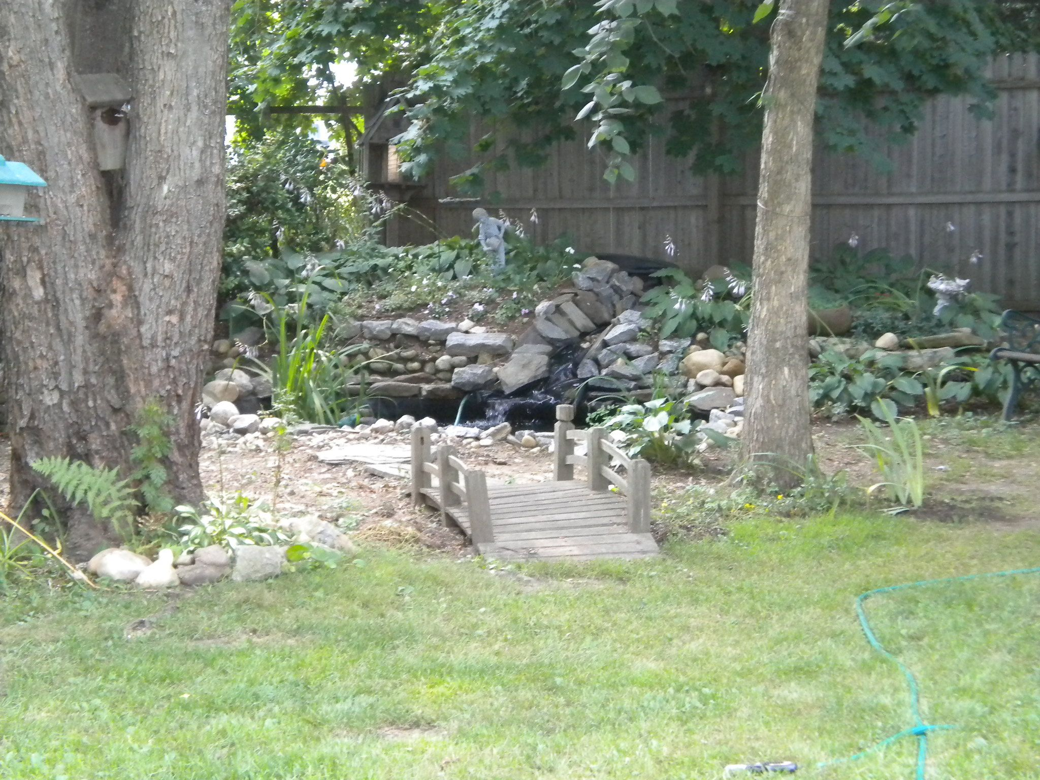 backyard fish pond lilly ponds pinterest