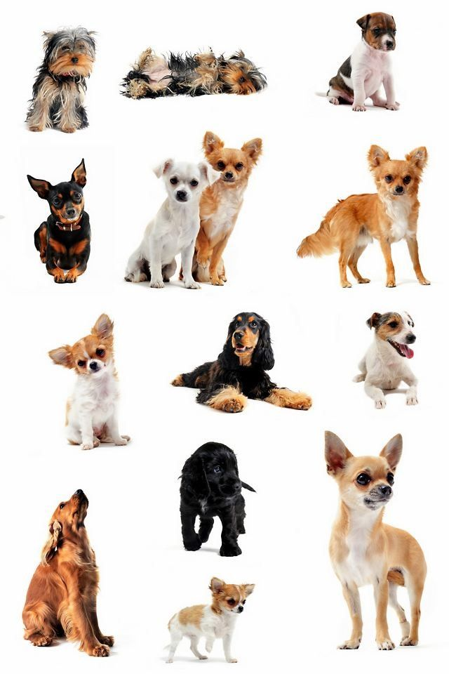 Different type of puppies the image kid for What type of dog is this