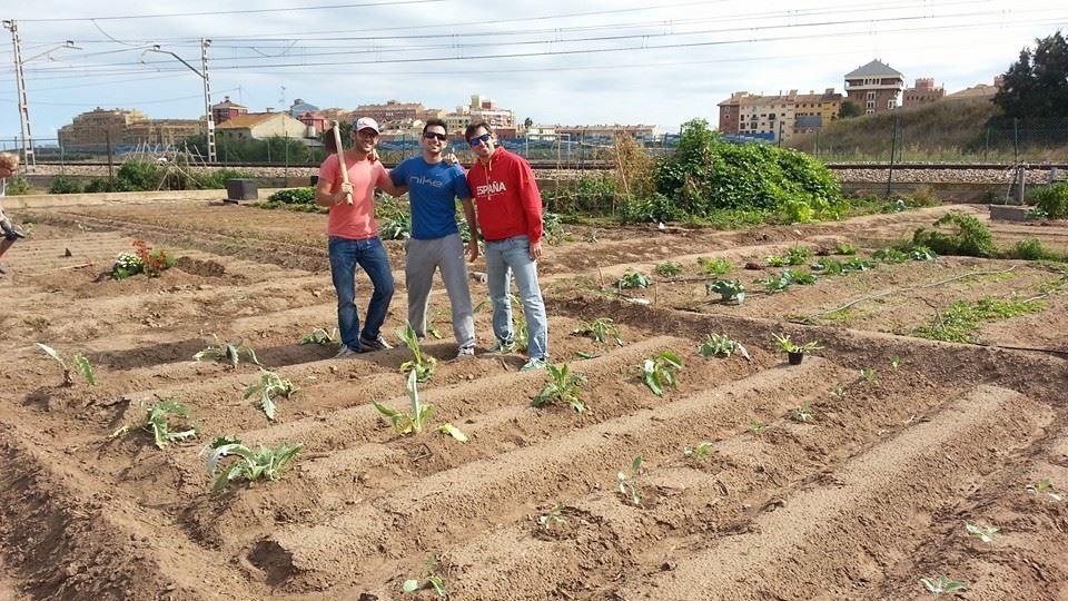 nuevos-hortelanos-plantan-alcachofas