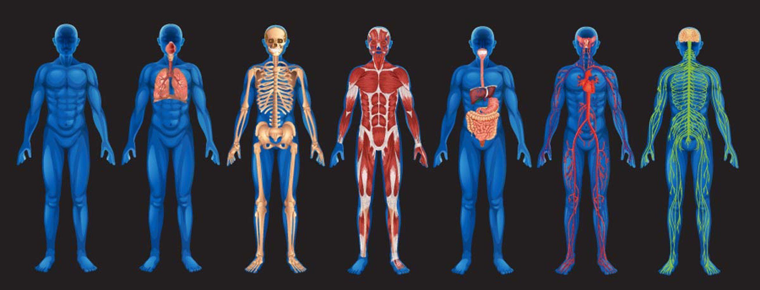 The unfashionable human body 85
