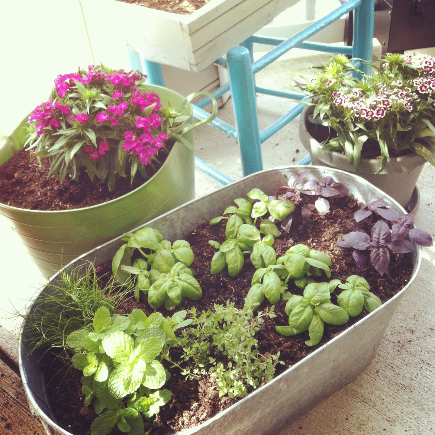 Herb container gardening ideas photograph easy herb contai for Balcony herb garden designs containers
