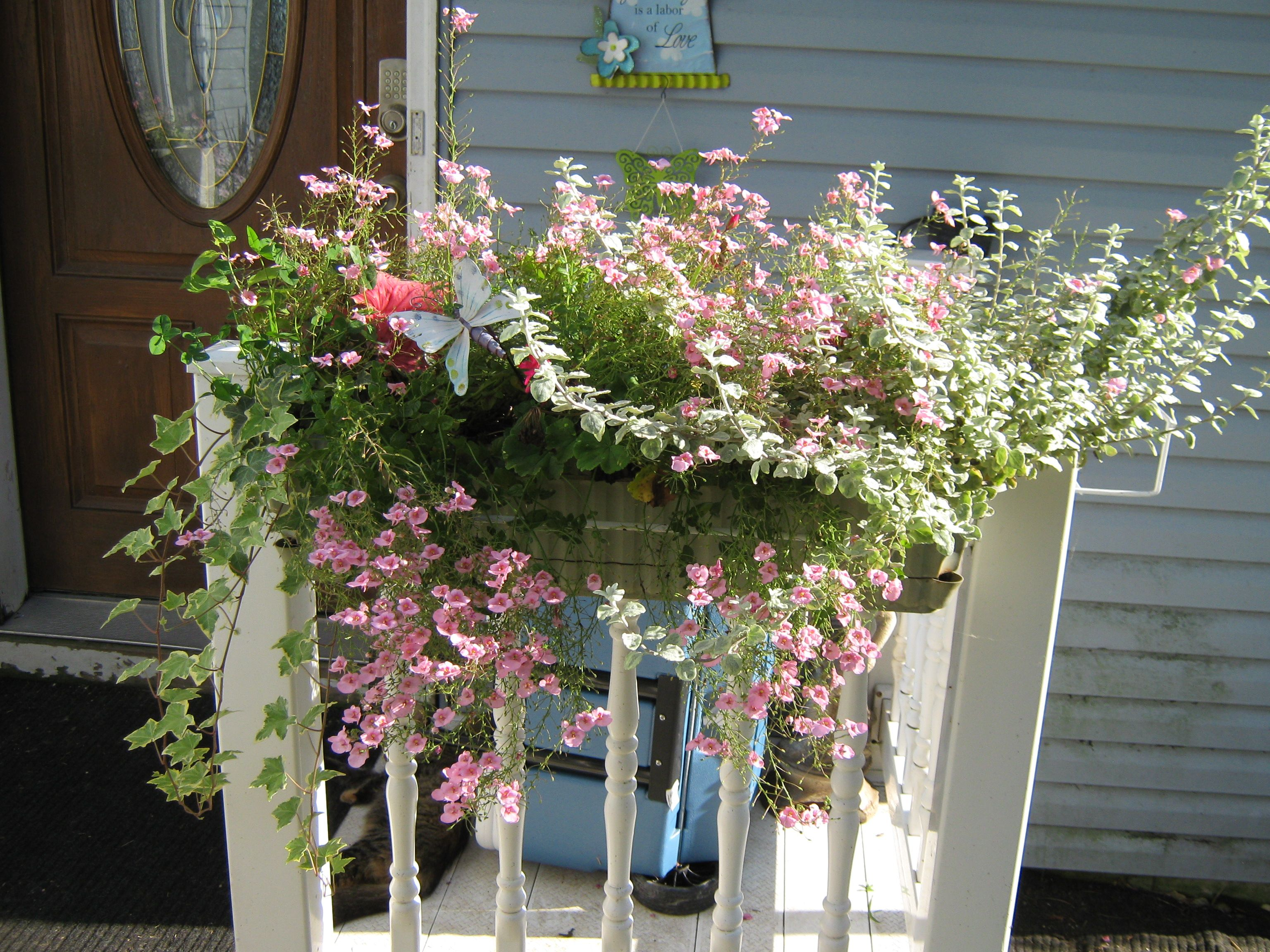 Flower box flowers garden ideas pinterest for Flower garden box ideas