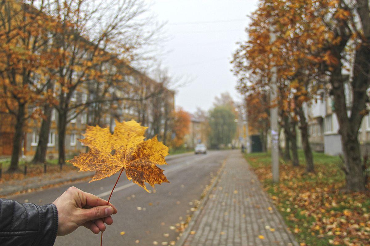 На улочках города Пионерский. Фото: Evgenia Shveda