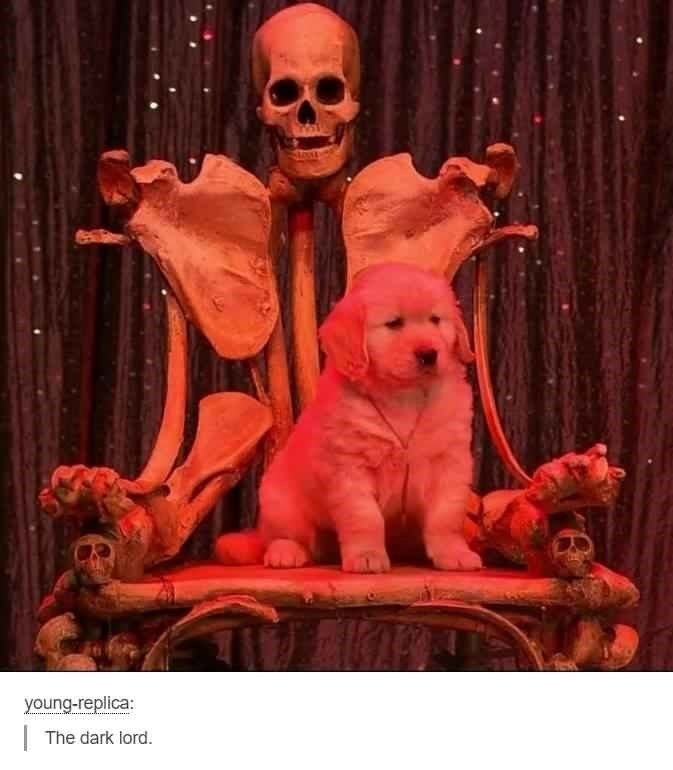 We gathered up some Satanic memes that the Devil himself would smile upon! #Memes #Satan #Religion #Tumblr #Puppy