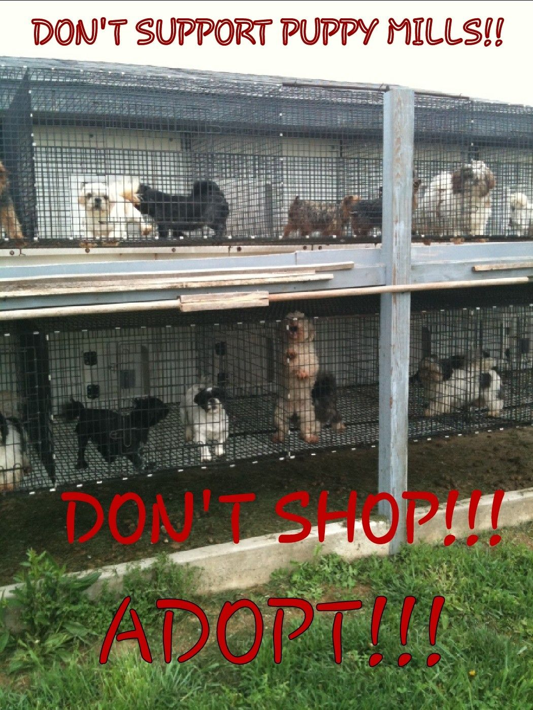 Please Adopt Take A Look In A Local Shelter And Find Your New Bff Puppy Mills Buy Puppies Puppies
