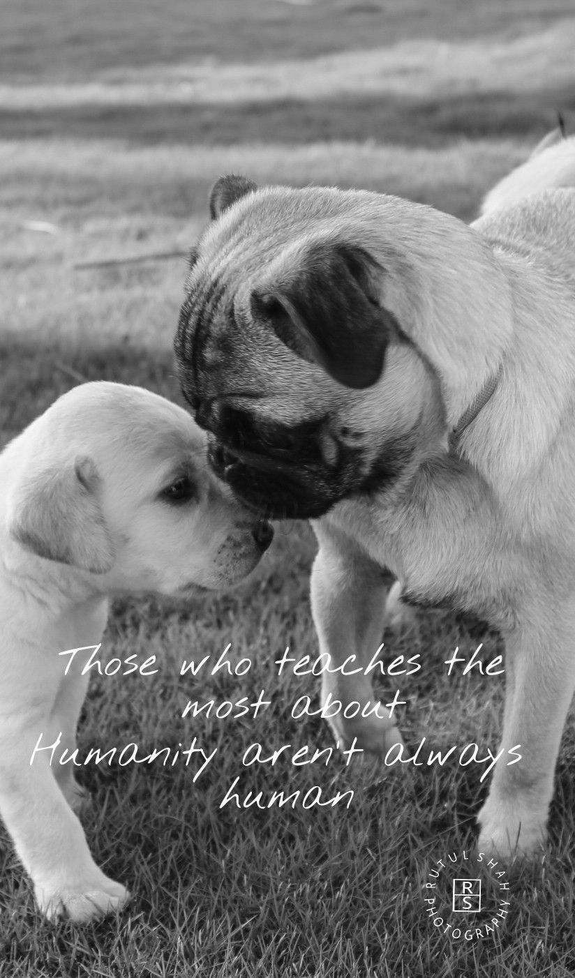 Those Who Teach The Most About Humanity Aren T Always Humans Love