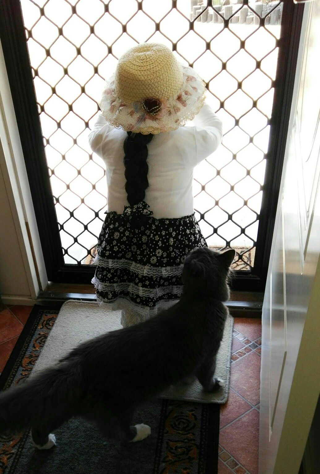 Poor Cat hoping she will play with him. Cats, Poor