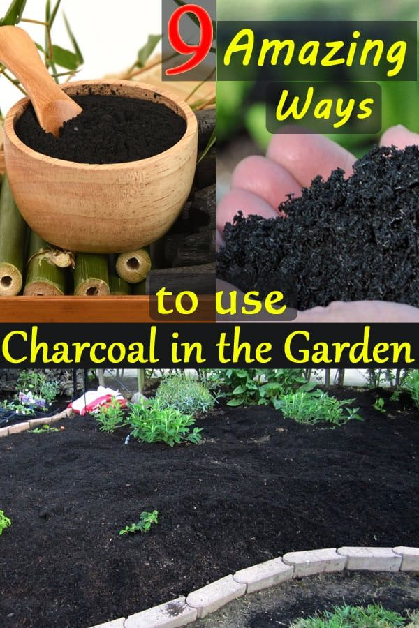 It might sound weird at first, the Uses of Charcoal in the Garden are many! If you want to know the multitude of benefits it has on offer, keep reading!
