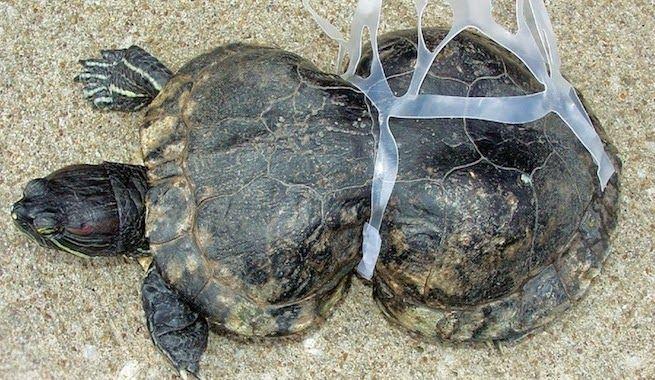 Por qué el plástico puede ser nefasto para la vida animal
