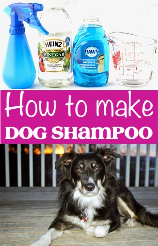 Dog Shampoo DIY Homemade Recipe! {Easy 3-Ingredient Spray}  This simple trick will save you so much!  Go grab the recipe and give it a try this week!