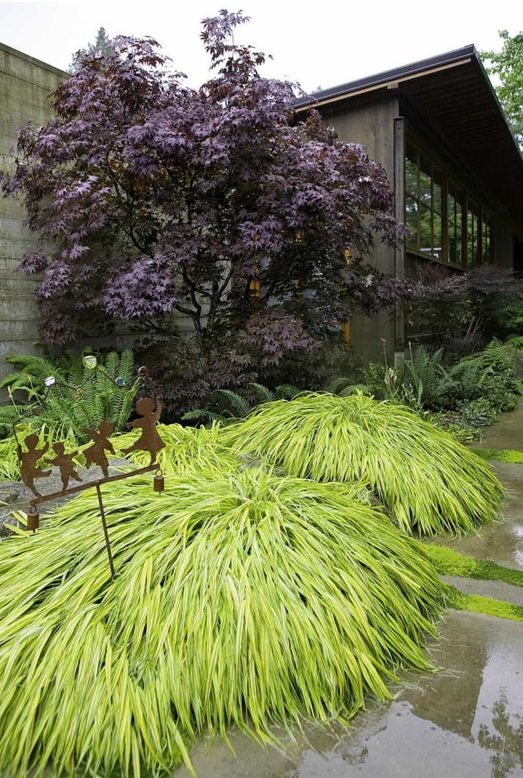 Outdoor Garden With Stake And Japanese Forest Grasses