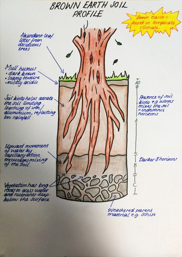 Brown Earth Soil Profile Sqa Highers Exams Diagram Revise Brown Earth Soild Profile Brownearthsoilprofile Horizons Roots Earth Science Earth Soil