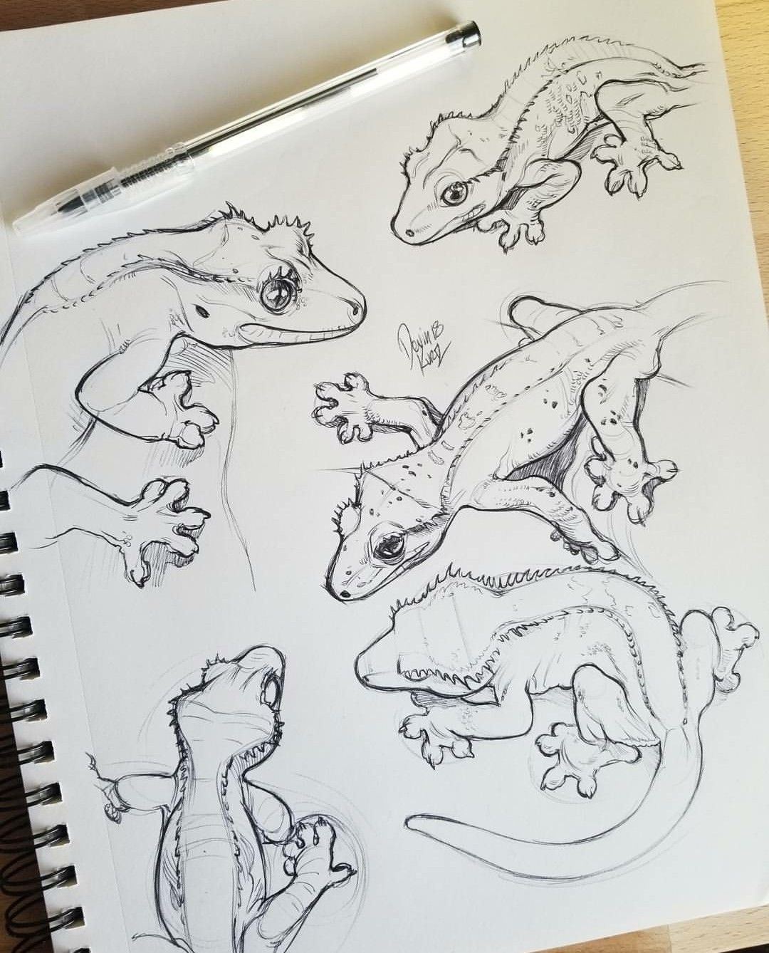 29+ Crested gecko coloring page info