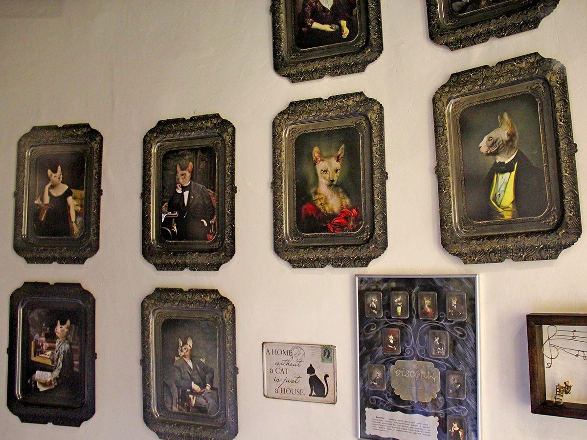 Шикарные кошачьи портреты из коллекции музея. Фото: Evgenia Shveda