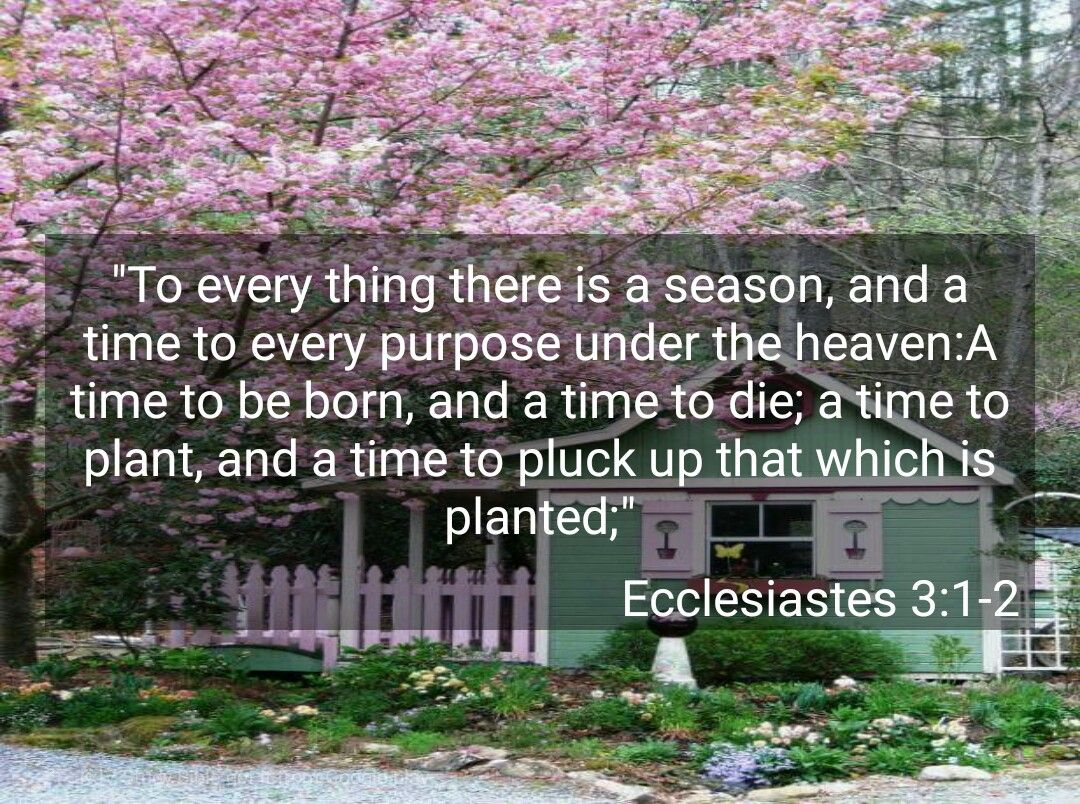 Ecclessiastes 3 1 2 Kjv This Came Up As My Daily Inspirational Verse And Today Is My Aunt S Funeral She Is Home With Th Inspirational Verses Kjv Ecclesiastes