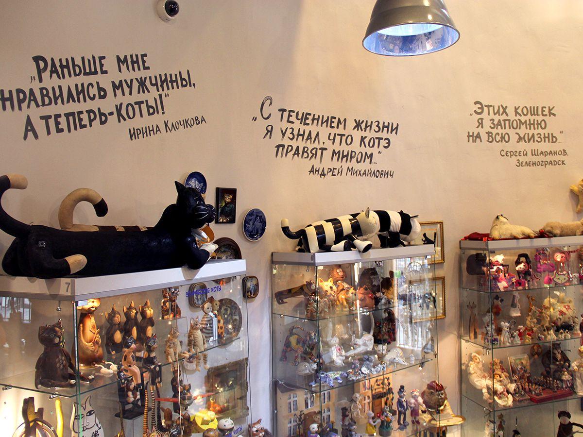 В музее кошек в Зеленоградске. Фото: Evgenia Shveda
