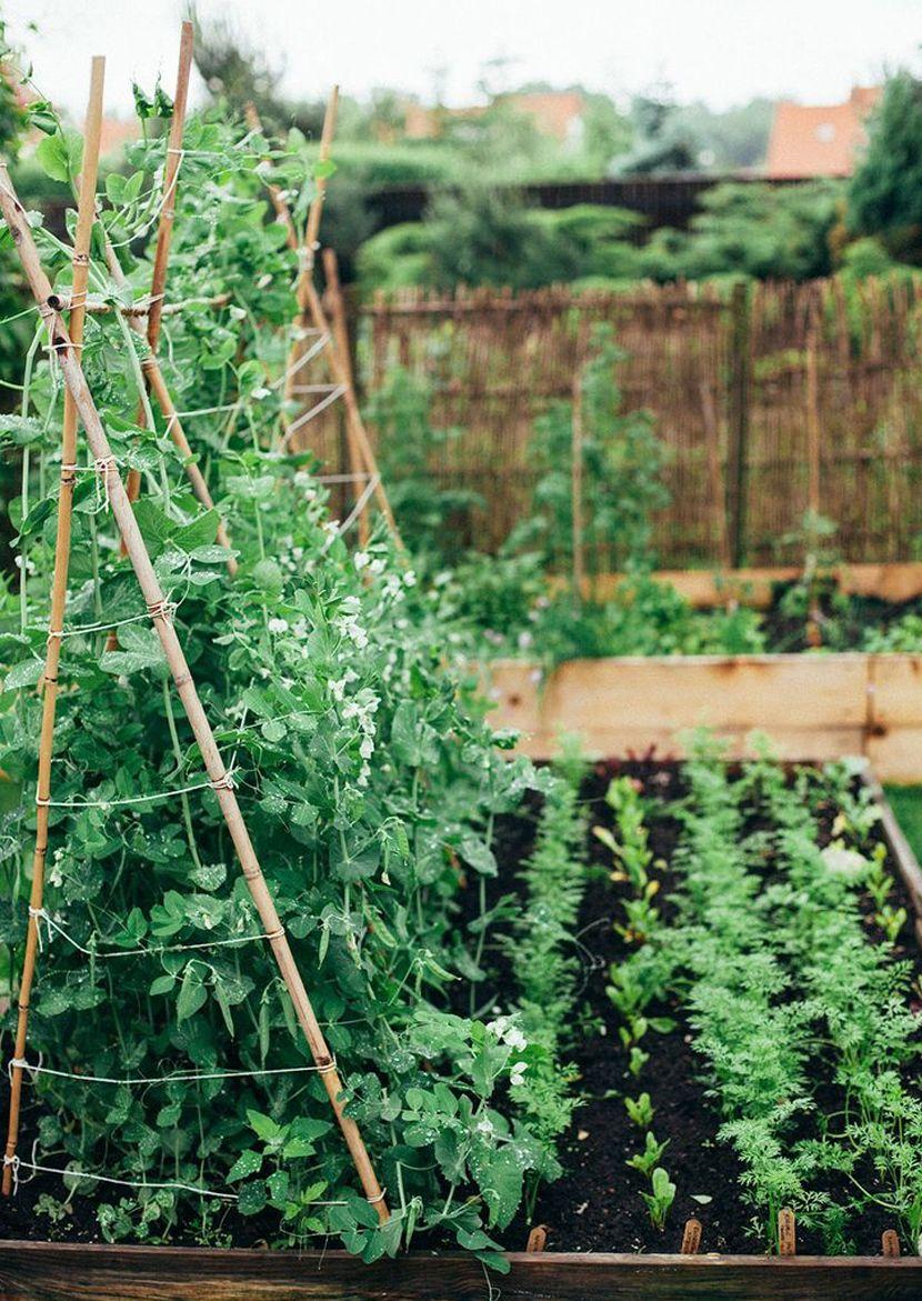 Garden Dream   Fresh Exchange