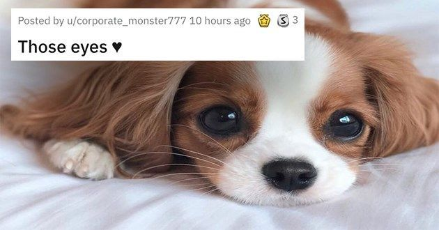 We scoured the internet to bring you the cutest animal pictures of the week!#cute #cuteanimals #cutephotos #cutenessoverload #aww #cutecats #cutedogs