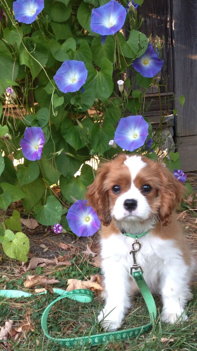 Trips, Puppys and Shopping on Pinterest