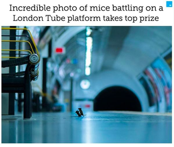 Mice battling on a London Tube platform takes top prize