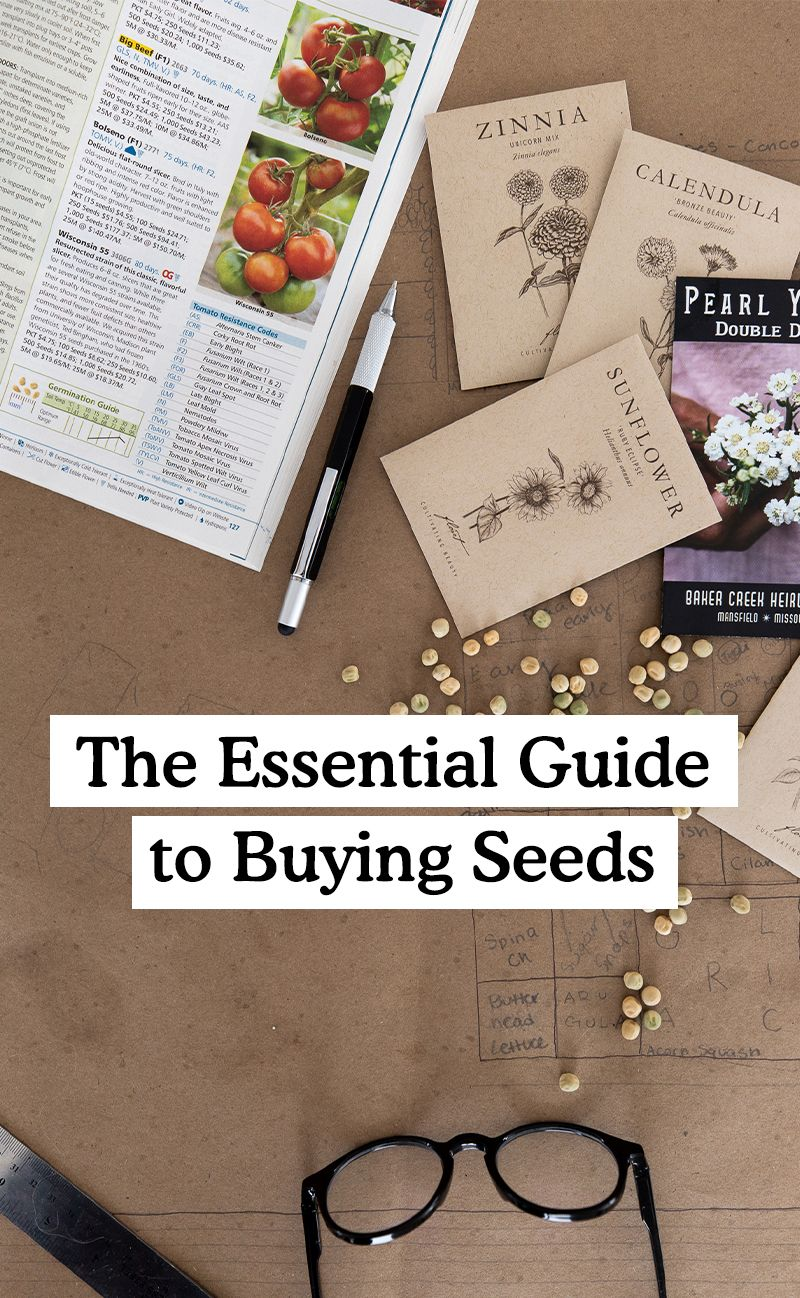 The Essential Guide to Buying Seeds for a Beginner