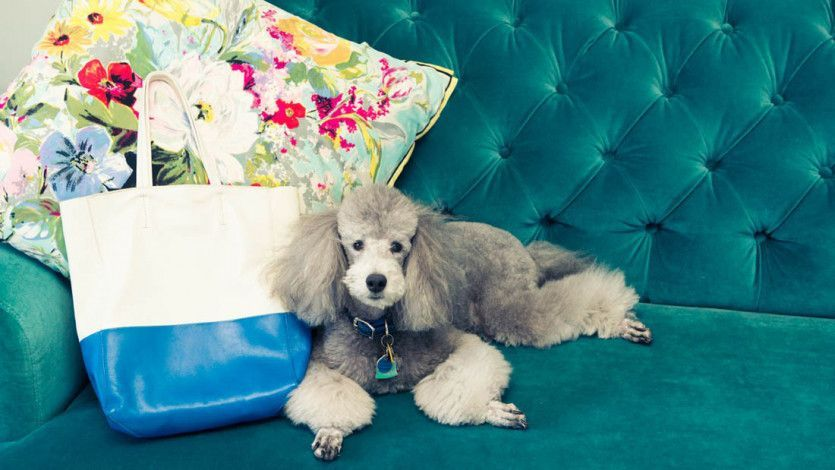 The wellness industry has a new market-- pets. A slew of wellness brands have recently hit the market, selling CBD, vitamins, and everything in between for pets. c/o @Coveteur  #wellness #wellnessindustry #InfluencerMarketing #marketing #Influencer