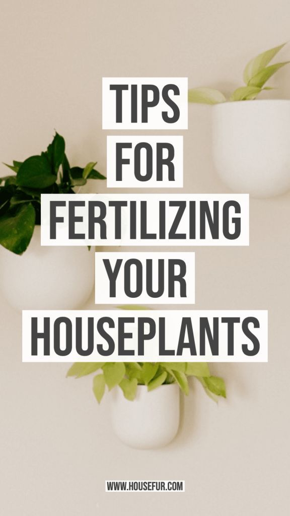 Tips for Fertilizing Your Houseplants | House Fur