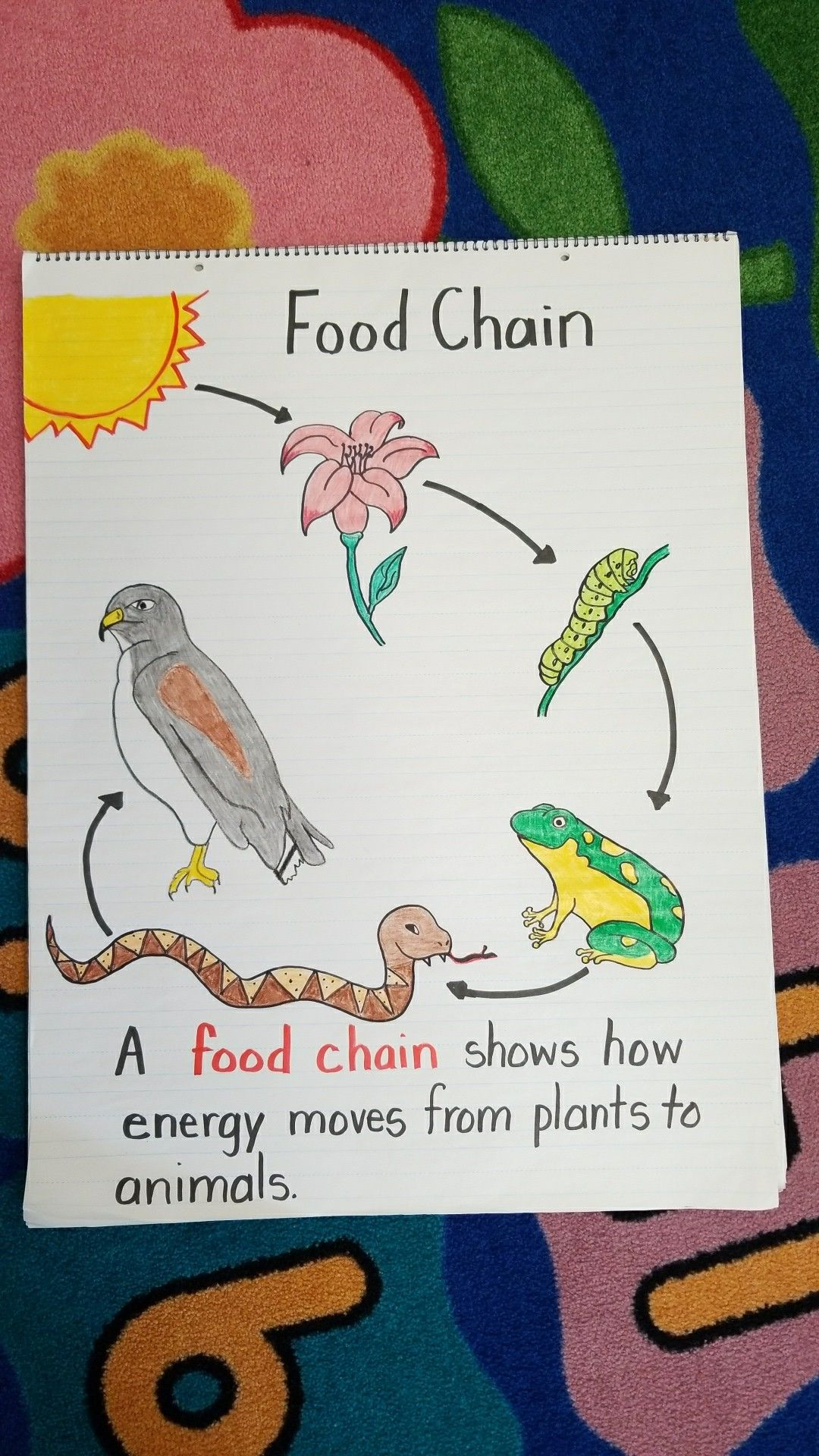 First Grade Food Chain anchor chart. Done! in 2020