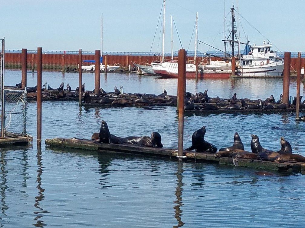 2017 noes anniversary trip astoria oregon seals barking