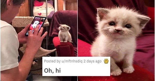 We scoured the internet to bring you the cutest animal pictures of the week!#cutecats #cuteanimals #cutephotos #animalphotos #animalvideos #awww #cutenessoverload #