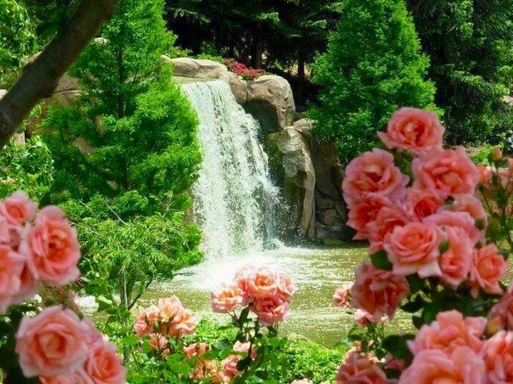 rose garden roses wallpapers and images desktop nexus groups - Beautiful Flower Gardens Waterfalls