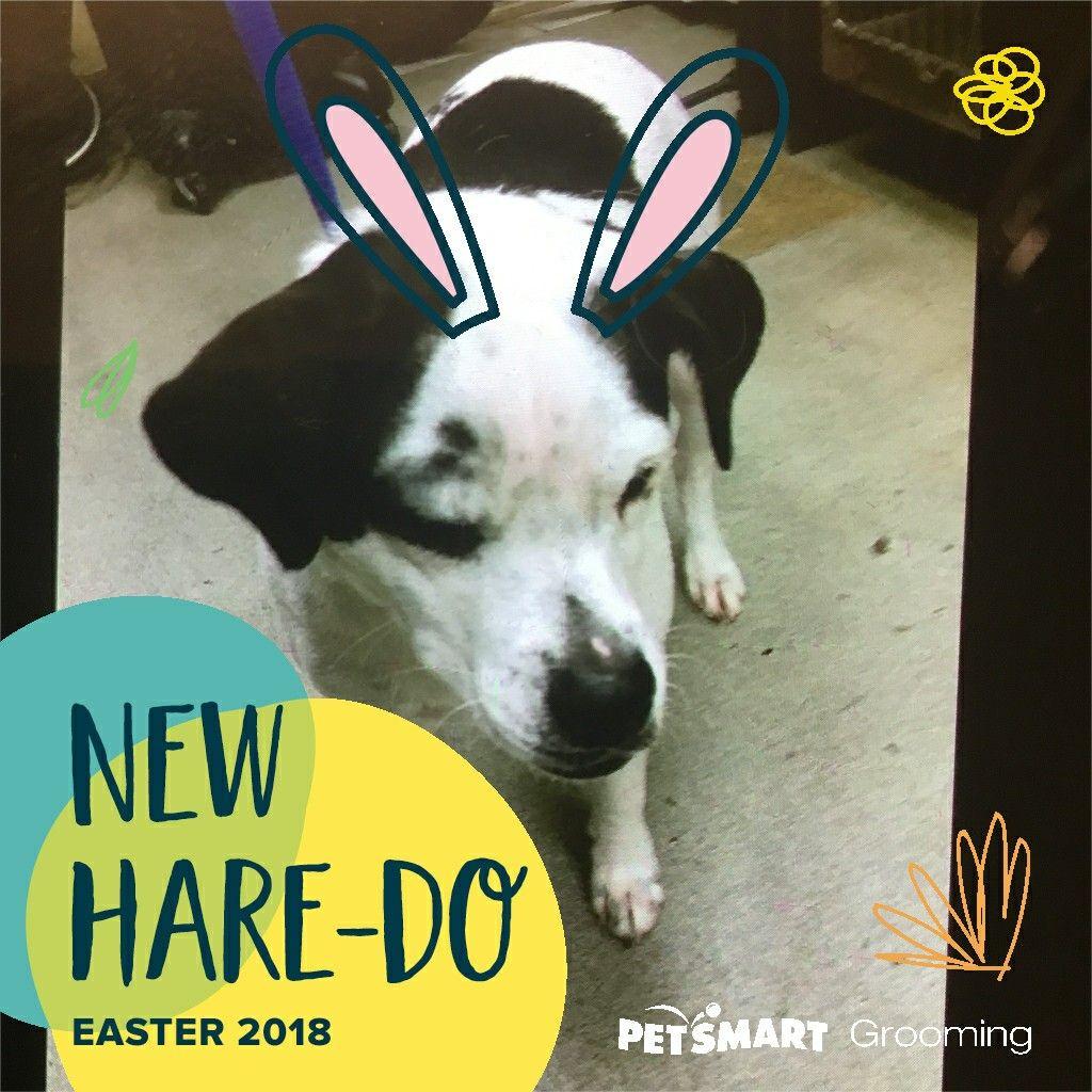 The Antics At Petsmart Grooming Pup Memes Easter 2018