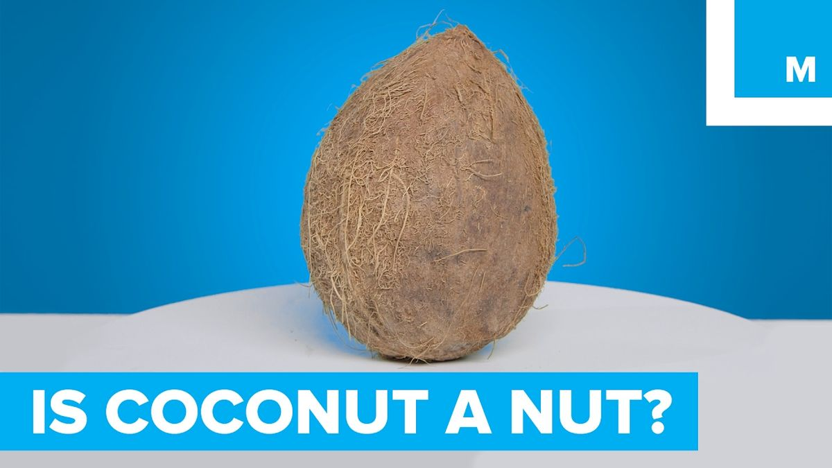 Is a Coconut a Nut? - Sharp Science