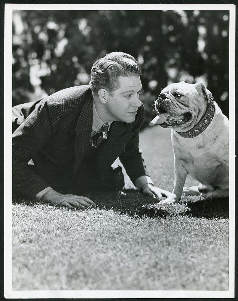 The Bulldog Breed Norman Wisdom Bulldog Breeds Classic Comedies