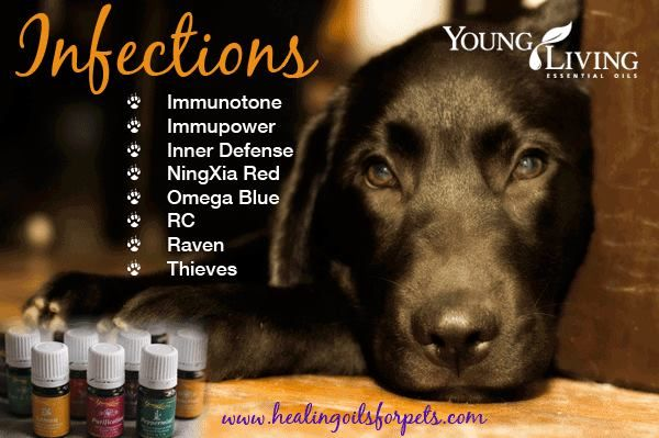 Essential Oils For Pets Dogs