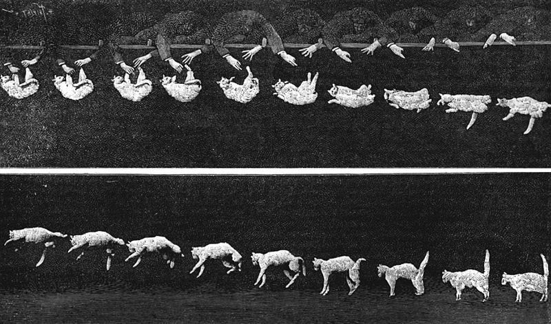 Falling Cat – images captured in a chronophotography by Étienne-Jules Marey (shown in the journal Nature, 1894)