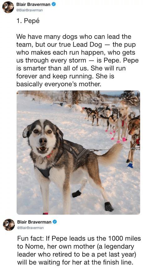 Oh my goodness, cute overload. #Cute #Animals #SledDog #Husky #Dogs