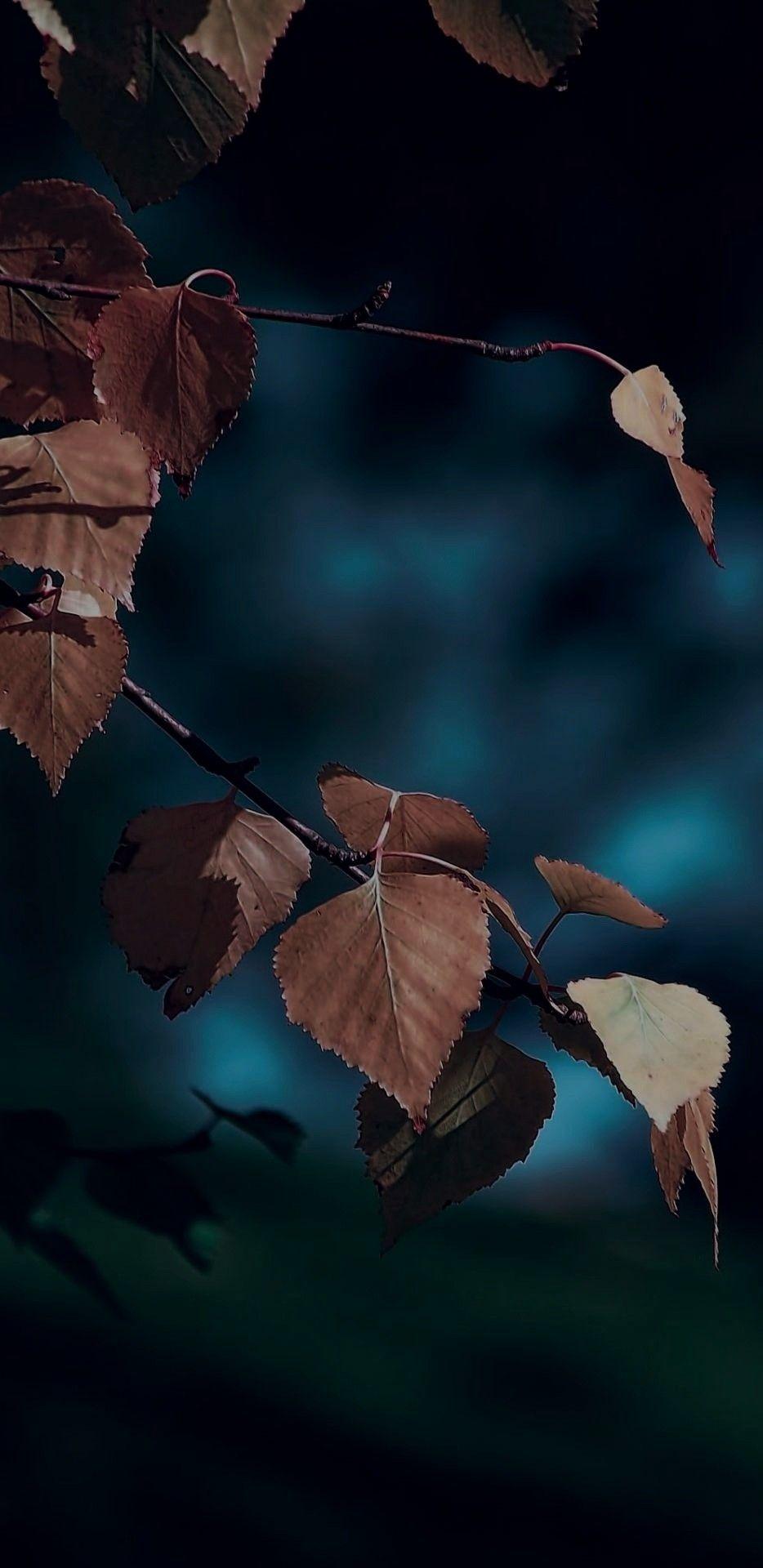 iOS 11, iPhone X, dark, blue, leaves, Autumn, apple